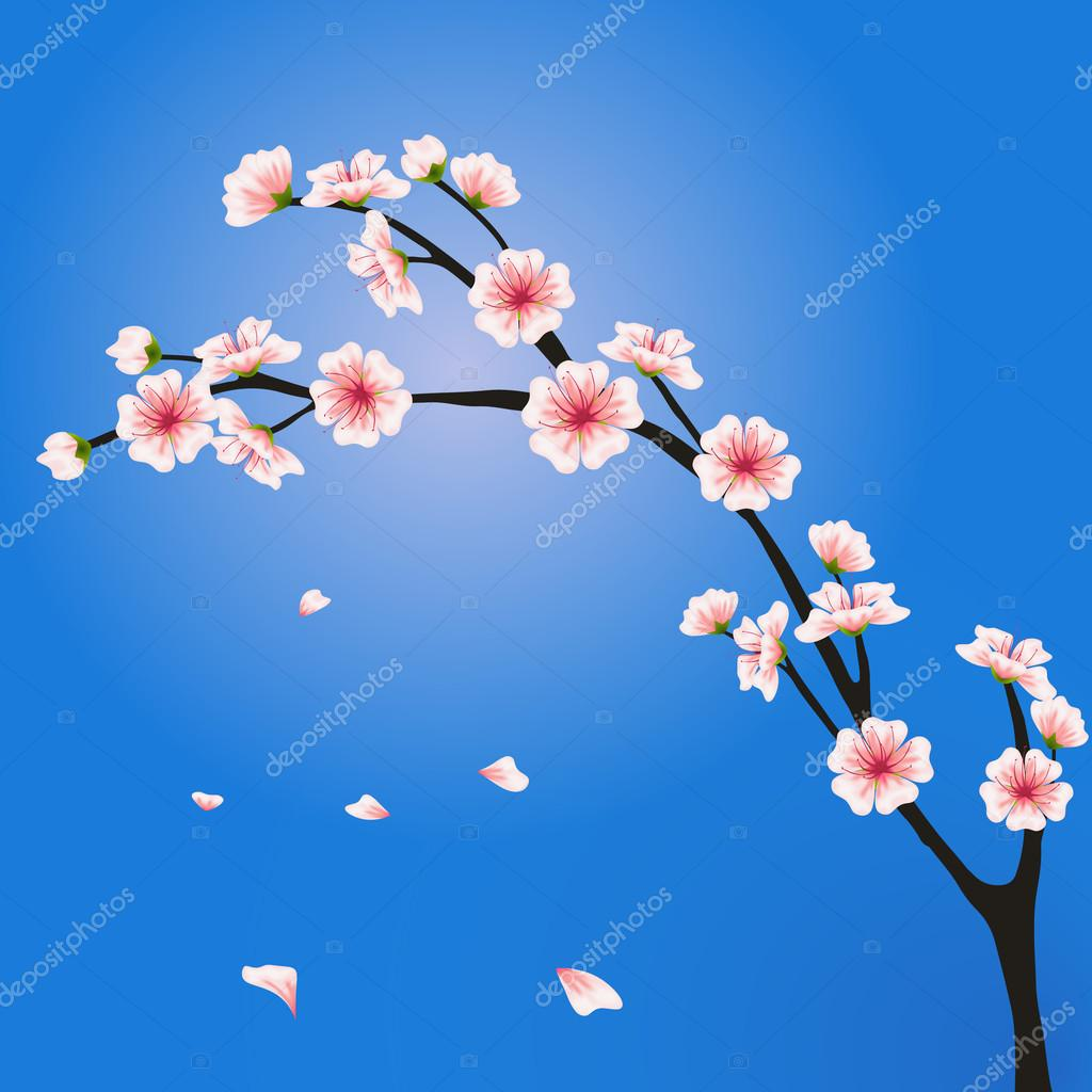 Vector sakura branch. Realistic floral asian design for invitation, greeting, wedding cards, websites, brochures, booklets, wallpapers in japanese style. Hanami festival spring flowers
