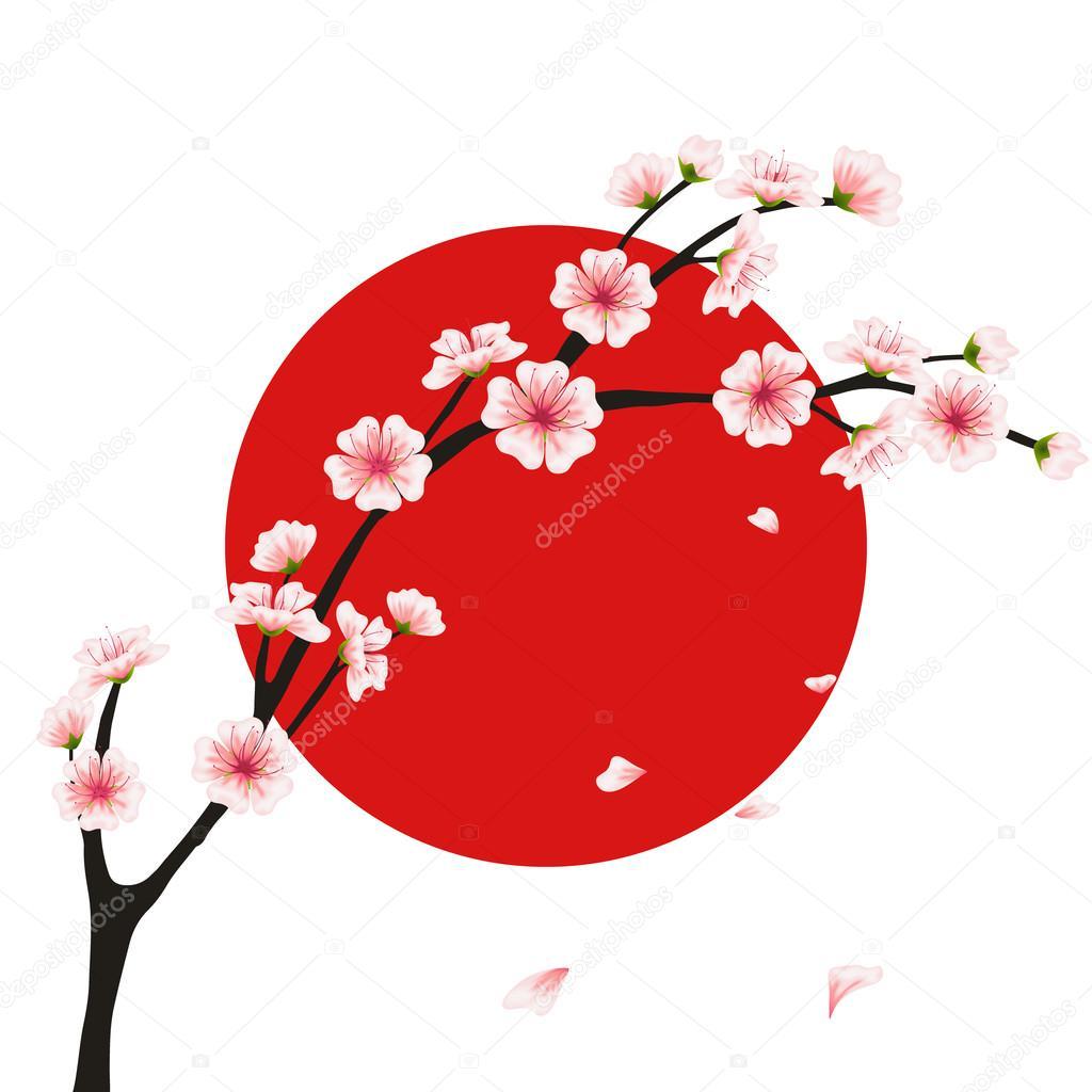 Vector sakura branch, flag. Realistic floral asian design for menu, invitation, greeting, wedding cards, websites, brochures, booklets, wallpapers in japanese style. Hanami festival flowers