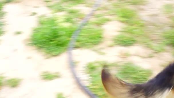 schöner Schäferhund spielte im Hof.