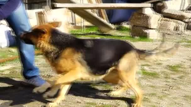 der Kerl spielt mit einem Schäferhund im Hof