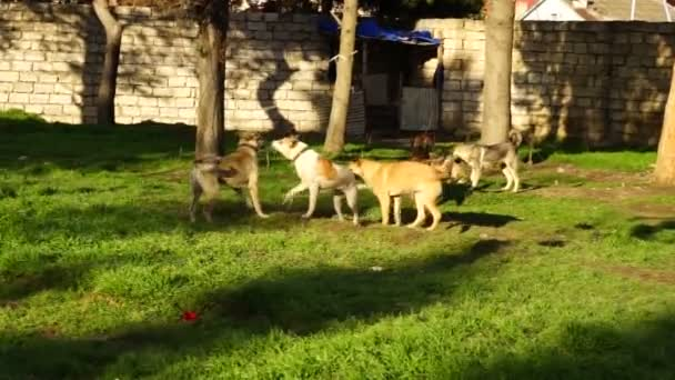 different breeds of dogs playing in the kennel yard