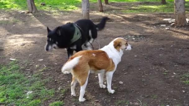 különböző tenyészt-ból kutyák játszik az udvaron kennel