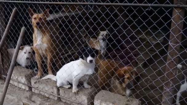 verschiedene Hunderassen, die im Zwingerhof spielen