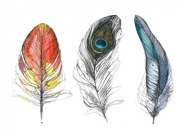 Watercolor feather. Vector illustration