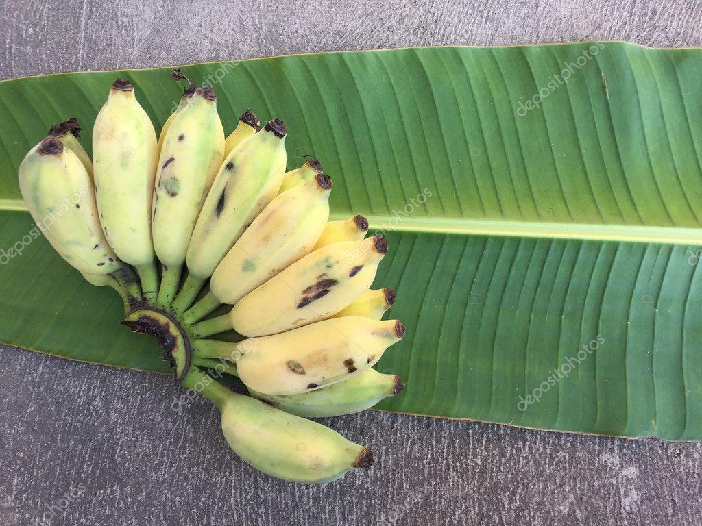 Cultivated Banana, Thai Banana and green banana leaf