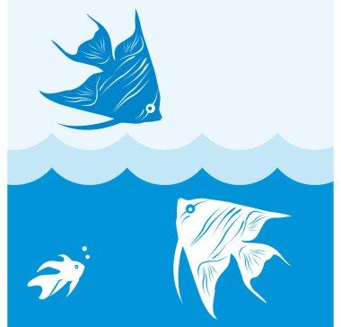 Queen of aquariums - angelfish.