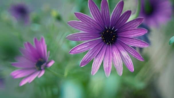 fialové květiny v zahradě