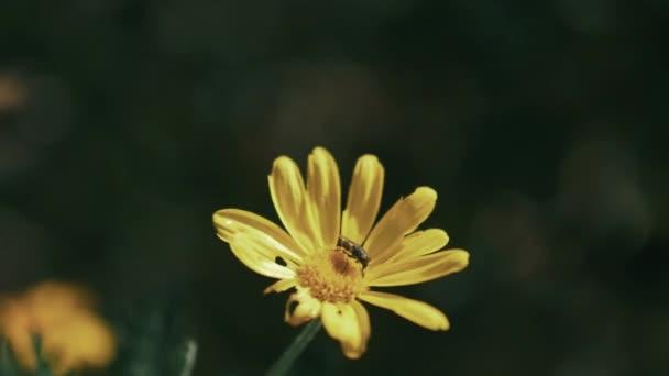 Zpomalený záběr vosa do květin