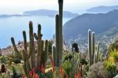 Kaktuszok, és kilátást nyújt a francia Riviéra