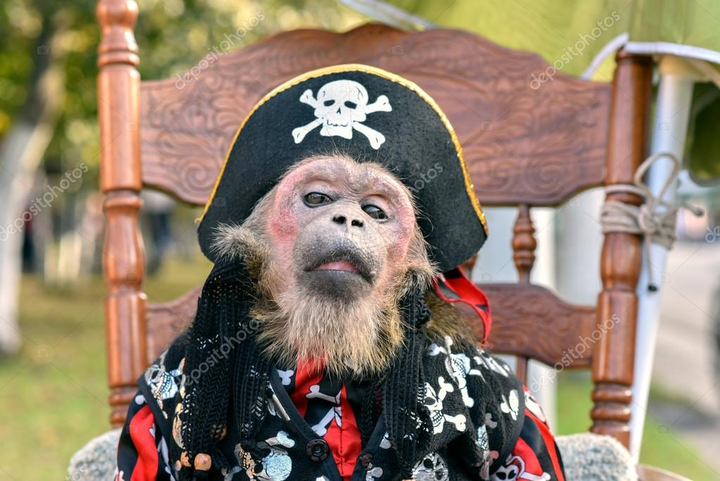 Little monkey, dressed in pirate costume sits on a chair