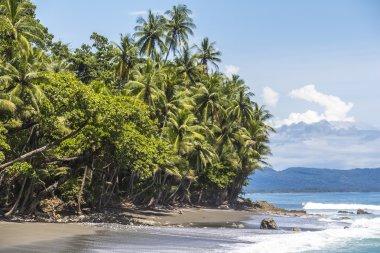 Beach and jungle in Costa Rica