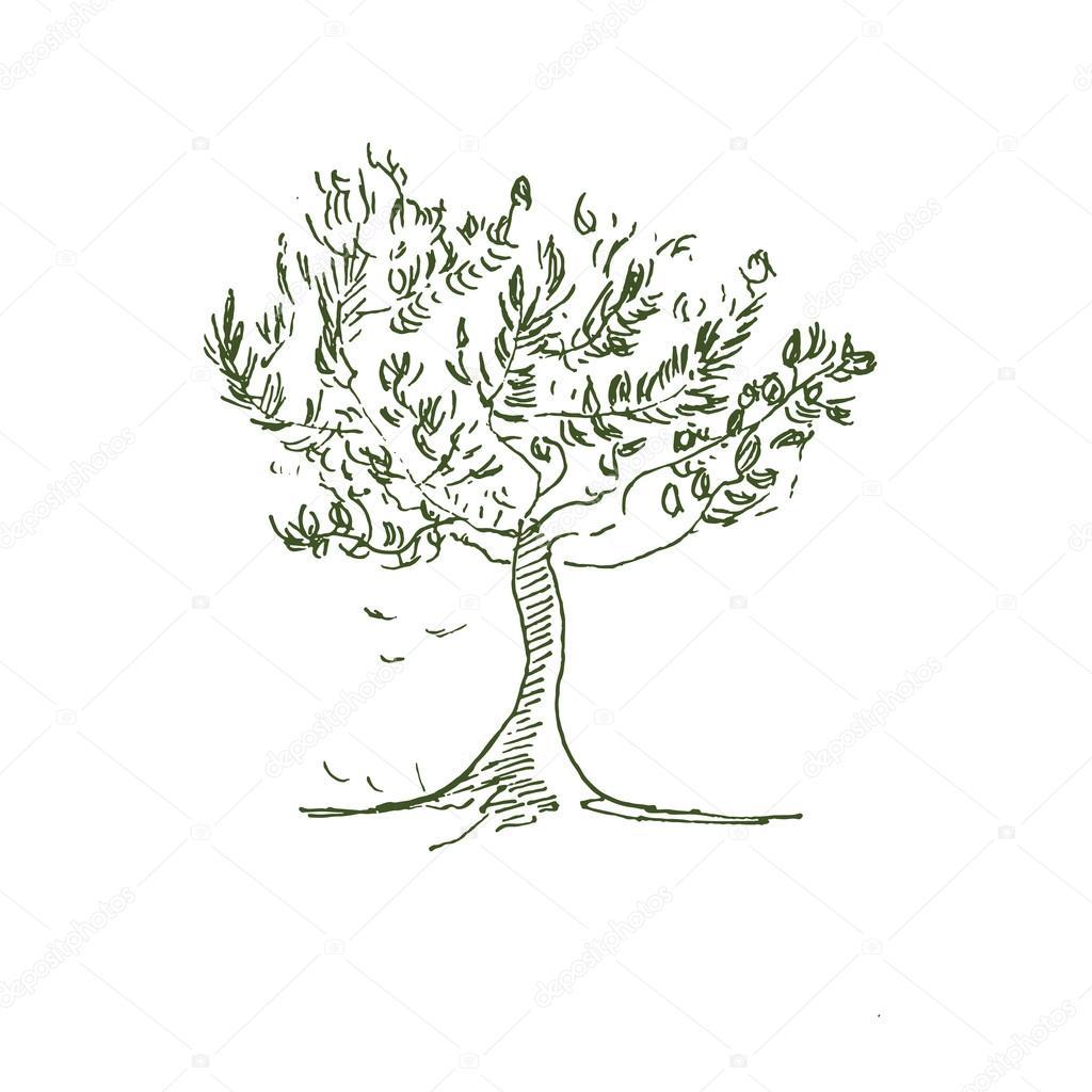 albero di ulivo disegnato a mano nel vettore vettoriali