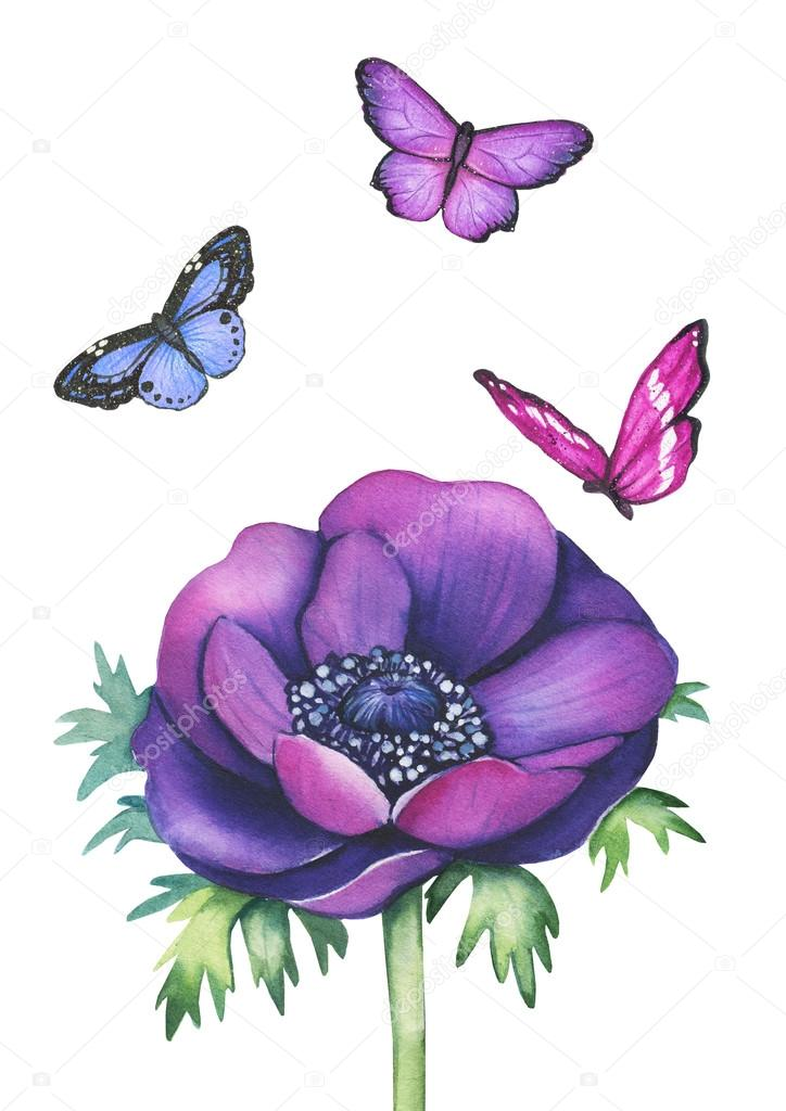 Watercolor anemone flower with butterflies