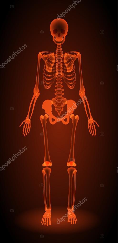 Menschliches Skelett, Röntgen — Stockvektor © elenbushe.gmail.com ...