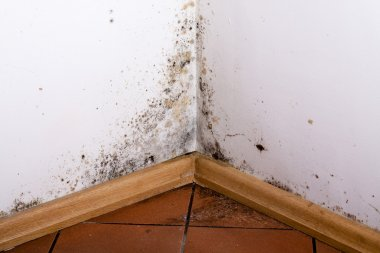 Black mold in the corner of room wall