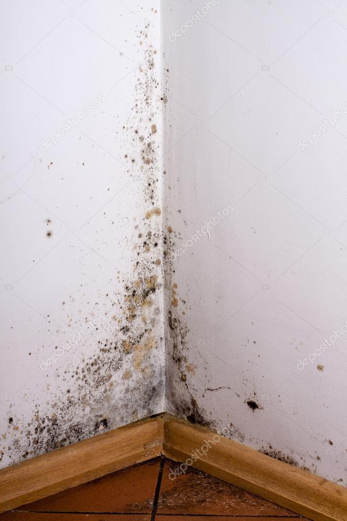 Moisissure Coin De Mur noir de moisissures dans le coin du mur de la salle — photographie