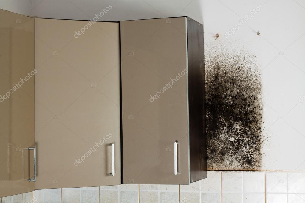 Schimmel In Huis : Zwarte schimmel in huis u2014 stockfoto © cegli.o2.pl #97068052
