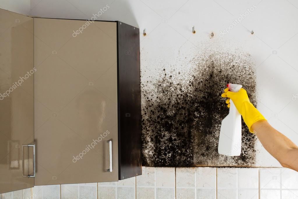 Black mold in house.