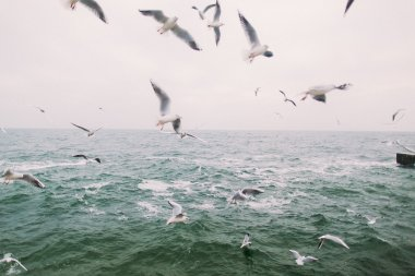 Vintage photo of flying seagulls. Beautiful sea landscape