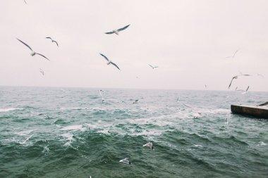 Vintage photo of flying seagulls. Beautiful sea landscape