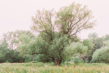 """Картина, постер, плакат, фотообои """"большое дерево со свежими зелеными листьями на весеннем лугу лес цветы водопады"""", артикул 110389356"""