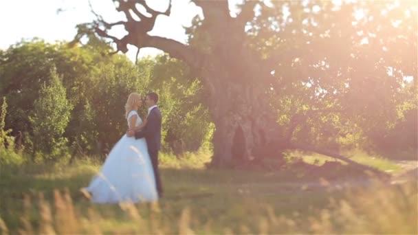 Nádherná elegantní šťastný stylový ženicha a na pozadí krásný západ slunce v lese