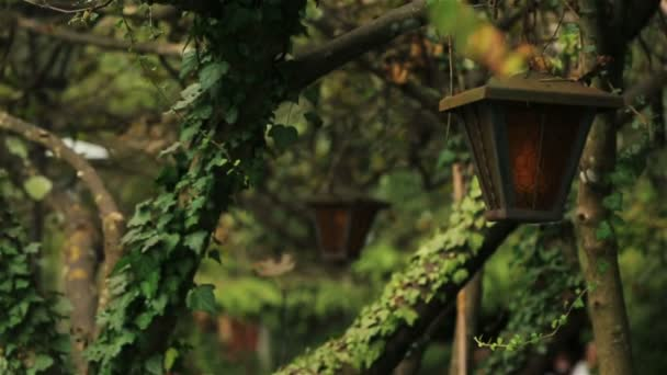 Régi lámpa a gyönyörű parkban, Montenegro, Budva