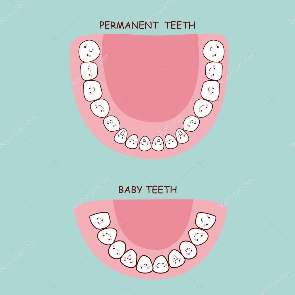 bleibende Zähne und Milchzähne — Stockvektor © etoileark #122009484