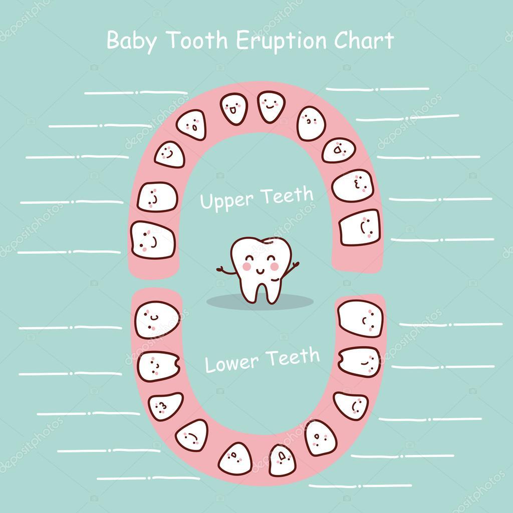 Baby Zähne Diagramm Datensatz