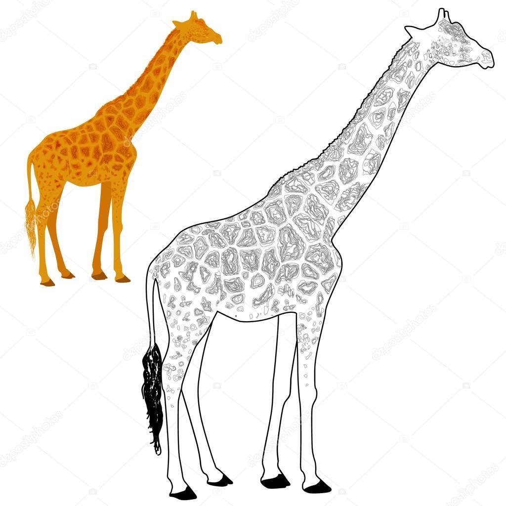 Página para colorear de jirafas — Archivo Imágenes Vectoriales ...