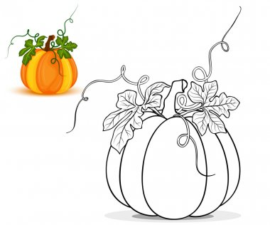 Pumpkin for coloring book vector