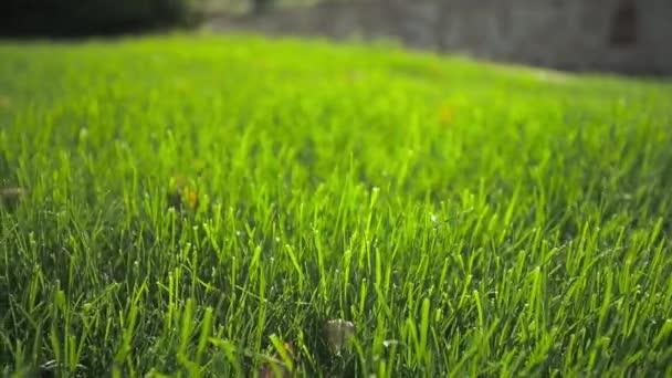 Pšeničné pole vlny přestěhoval povahou Summer Wind