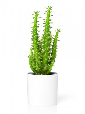 Decoration plant on white
