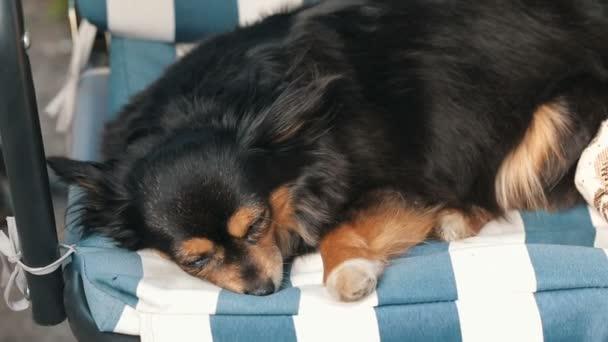 Malý pes na houpačce
