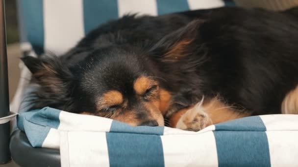 Malý pes spí na houpačce