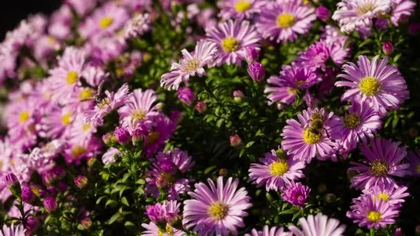 včely na květiny