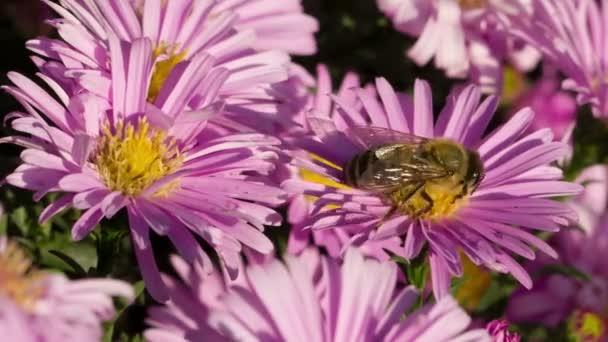 Méhecske Virág