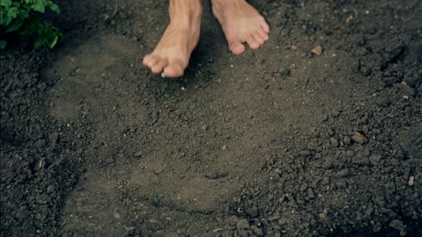 Nohama na zemi