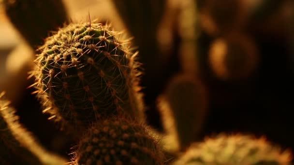 Domů kaktusy při západu slunce