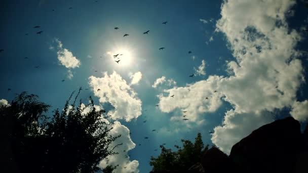 Ptáci letí proti modré oblohy jasno