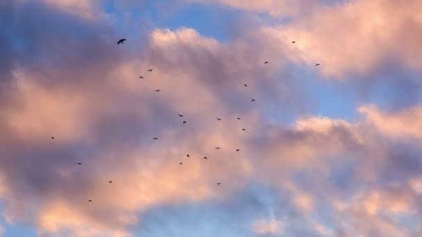 Varjú repül át a rózsaszín felhők