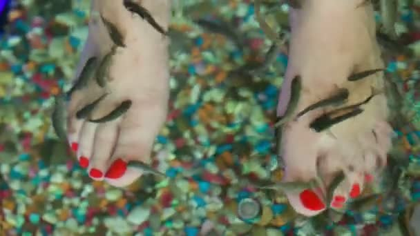 Fish spa feet pedicure