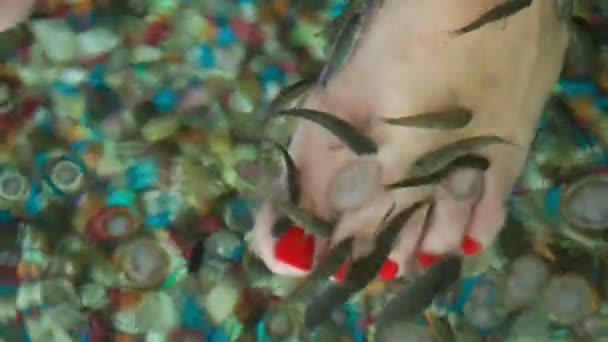 Fish spa feet pedicure