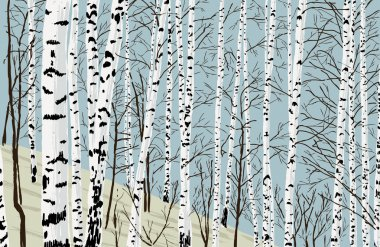 birches in the spring grove
