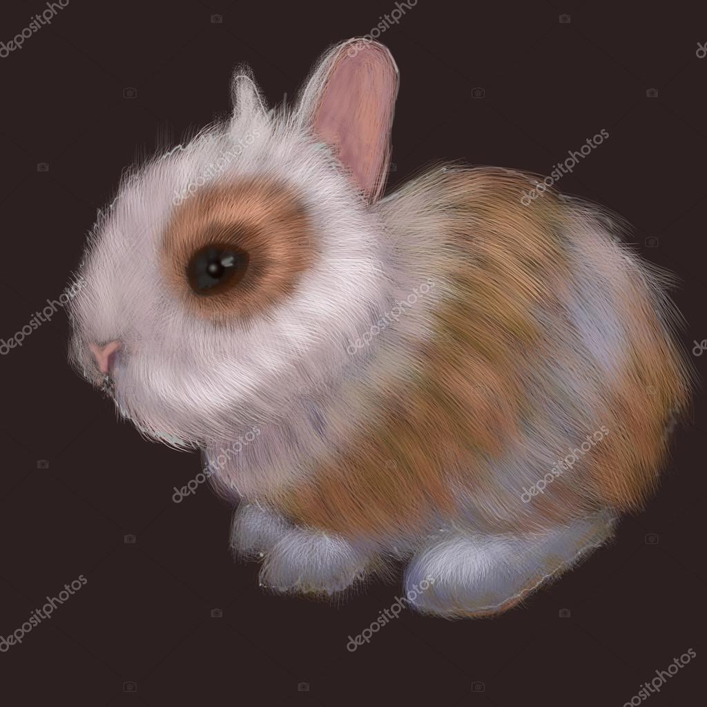 Rabbit Animals  Illustration