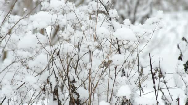 Krásné zimní bush v sněhové bouři
