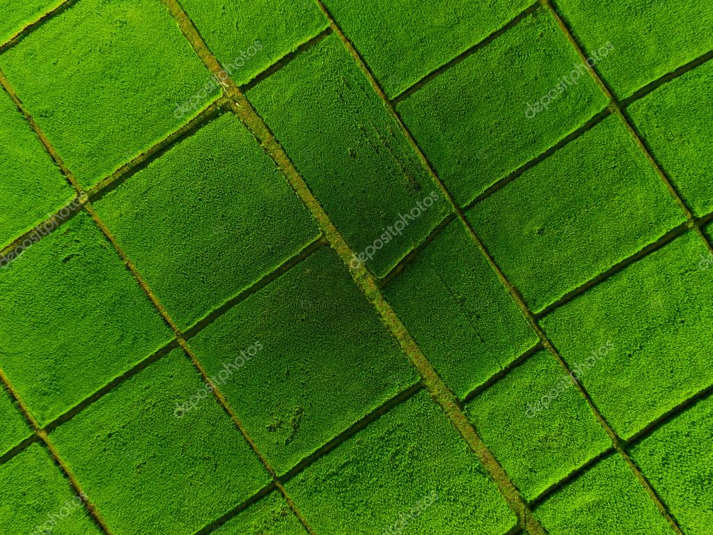 Aerial top view of the rice field from drone — Stock Photo ...