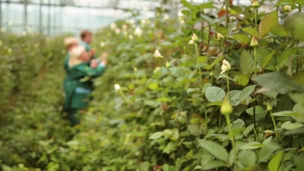 Zahradníci péče o růže