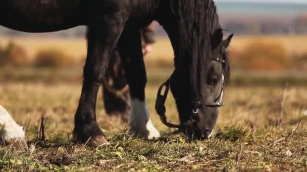 Kůň v poli closeup