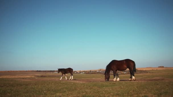 koně v oboru